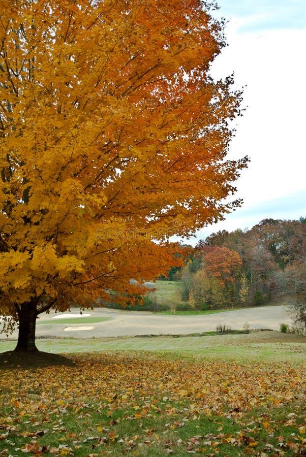 albero di golf di corso di autunno immagine stock