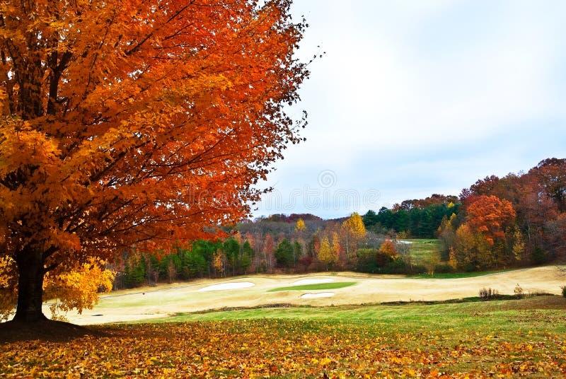 albero di golf di corso di autunno fotografie stock libere da diritti