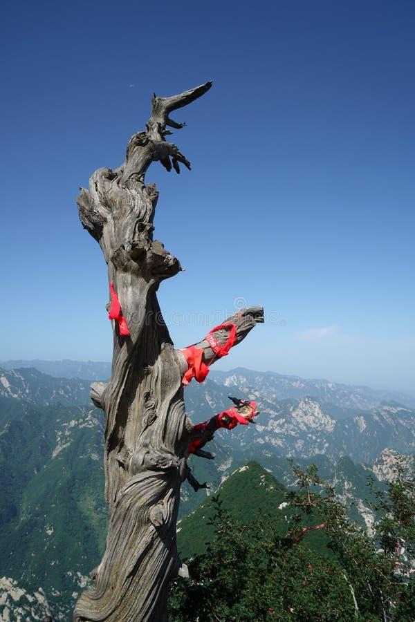 Albero di Huashan della montagna vecchio fotografie stock libere da diritti