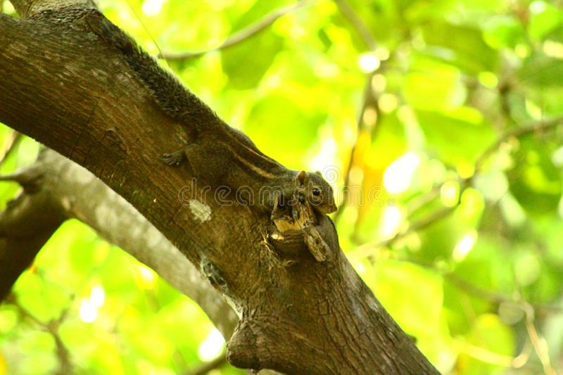 Albero di legno della natura degli scoiattoli fotografia stock