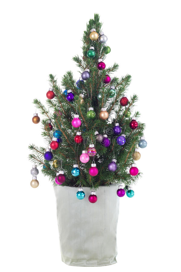 Albero di Natale conservato in vaso immagine stock