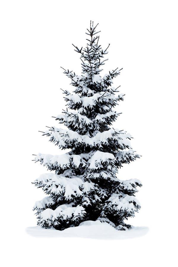 Albero di Natale coperto di neve. fotografia stock