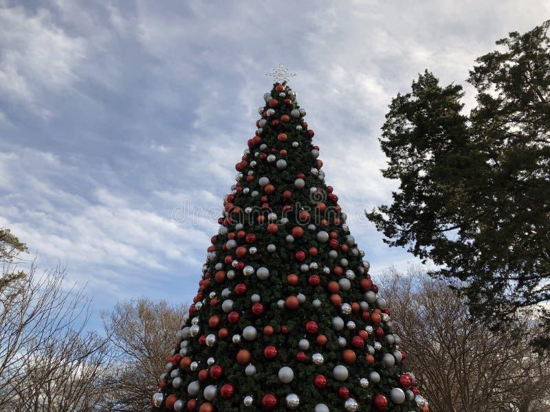 Albero di Natale in Dallas Texas immagine stock