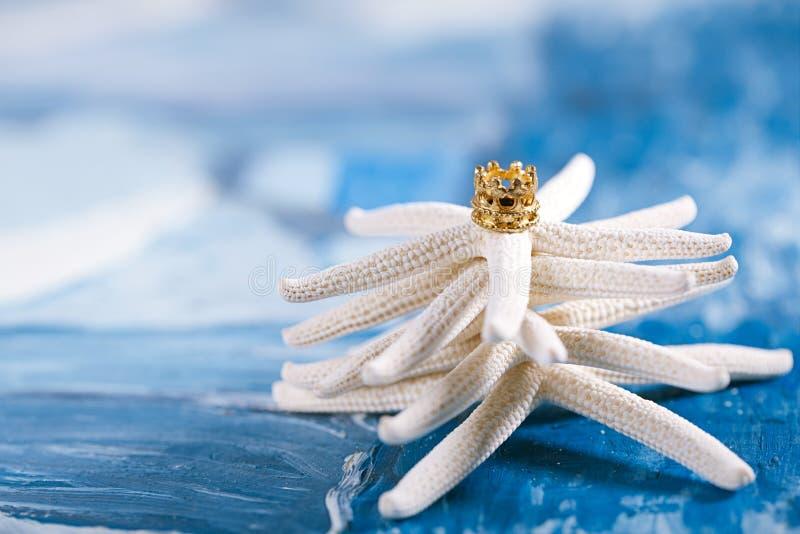 Albero di Natale delle stelle marine sulla spiaggia fotografia stock libera da diritti