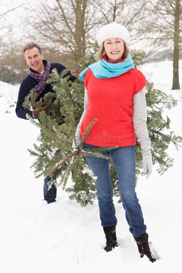 Albero di Natale di trasporto delle coppie maggiori in neve immagine stock