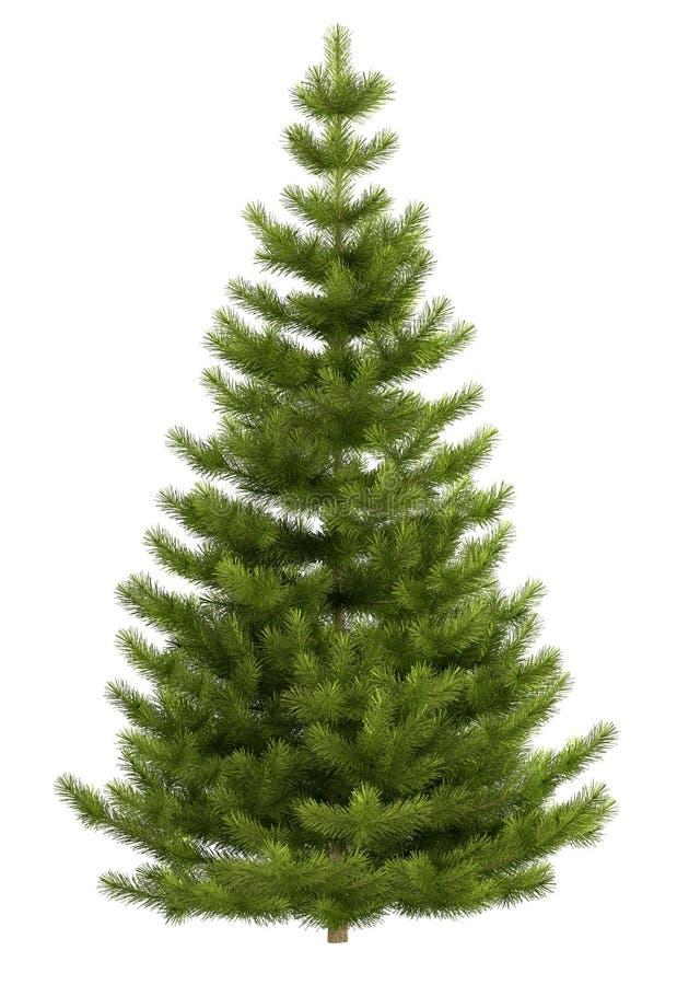 Albero di Natale isolato su priorità bassa bianca illustrazione vettoriale