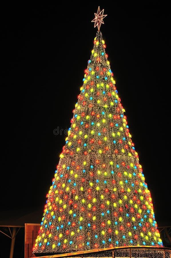 Download Albero Di Natale Nella Notte Fotografia Stock - Immagine di piacevole, natale: 7321122