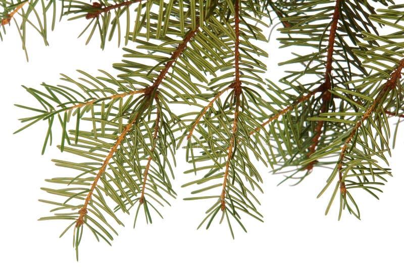 Albero di Natale sempreverde fotografie stock libere da diritti