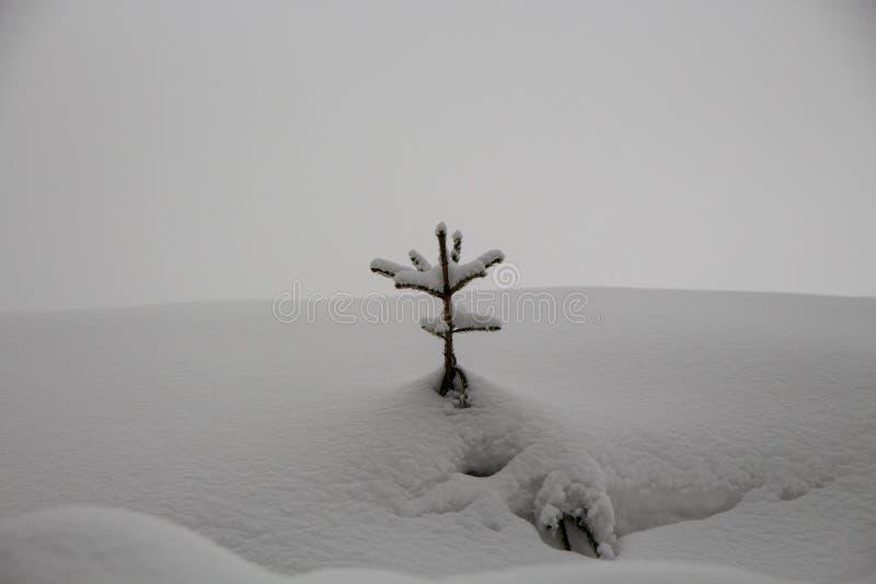 Albero di Natale di Snowy nella foresta fotografia stock