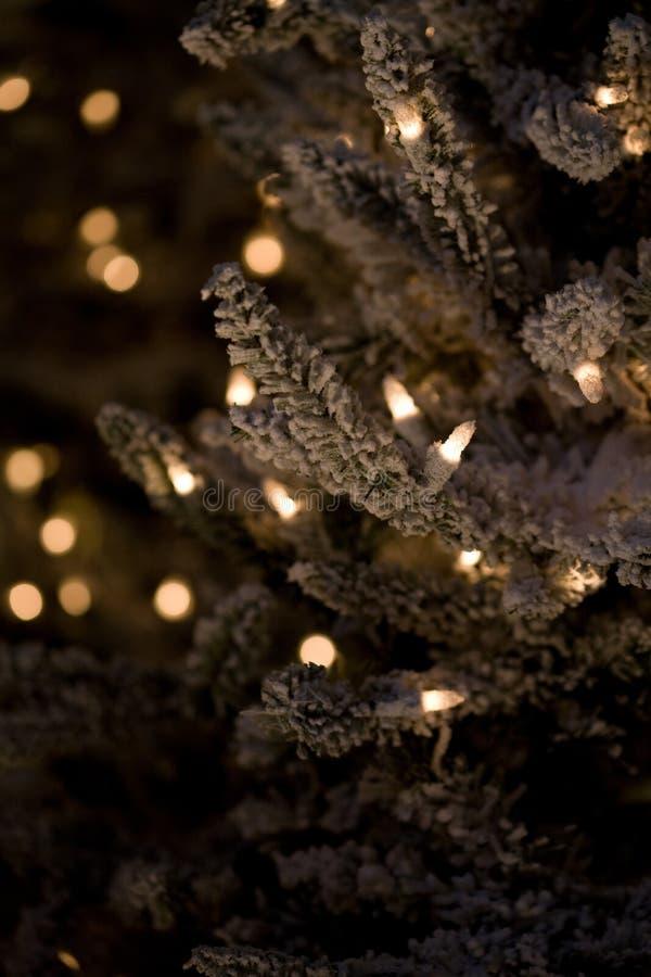 Albero di Natale di verde di vacanza invernale con le luci fotografia stock libera da diritti