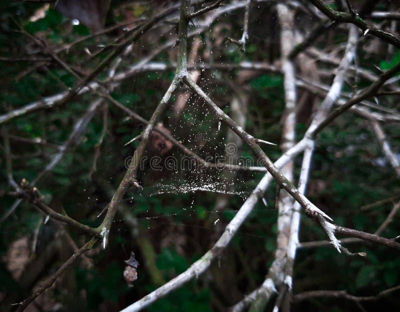 Albero di Naturale in vilage fotografie stock