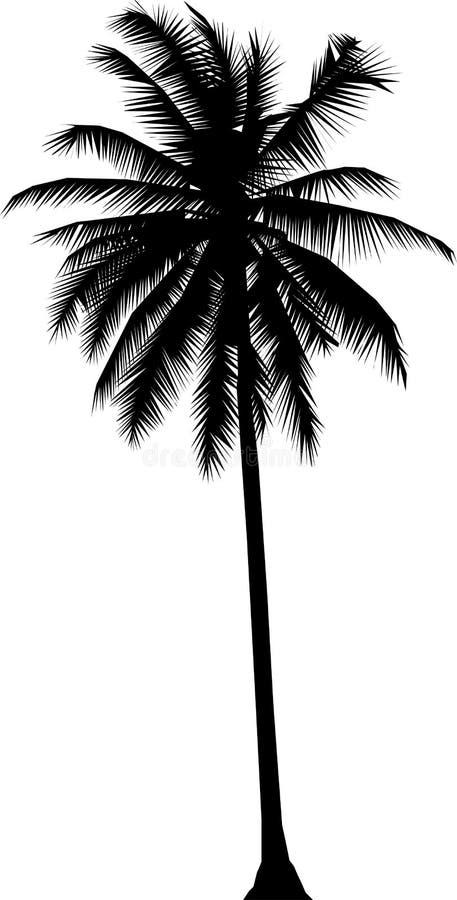 Albero di noce di cocco illustrazione vettoriale