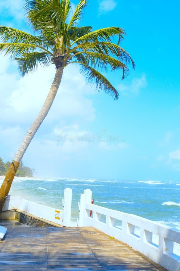 Albero di noce di cocco sul puntello dell'Oceano Indiano immagini stock libere da diritti