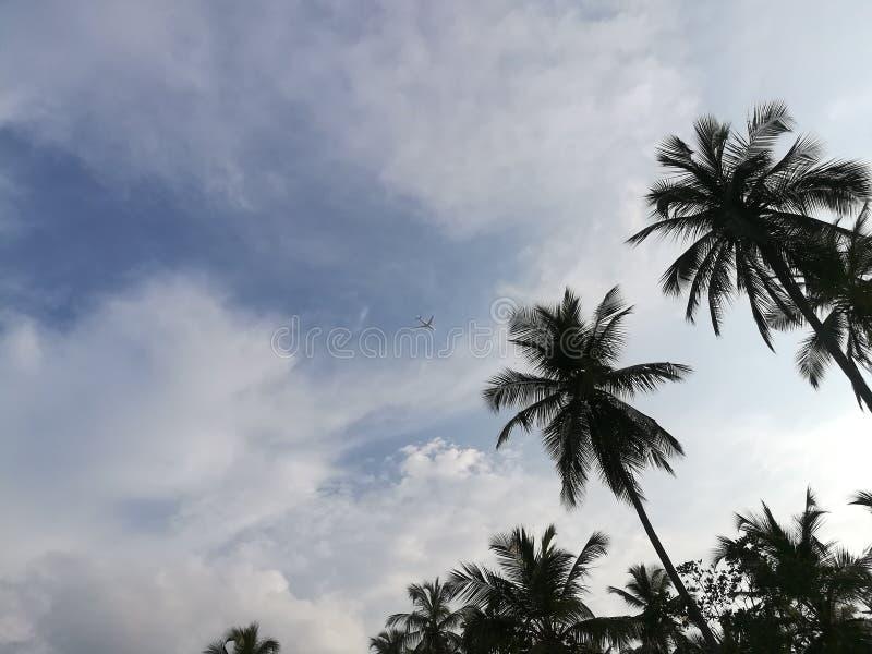 Albero di noci di cocco in Sri Lanka fotografia stock