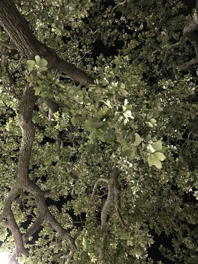 Albero di notte immagini stock