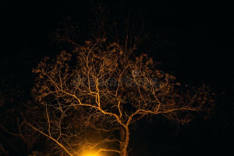 Albero di notte alla luce della lampada fotografia stock