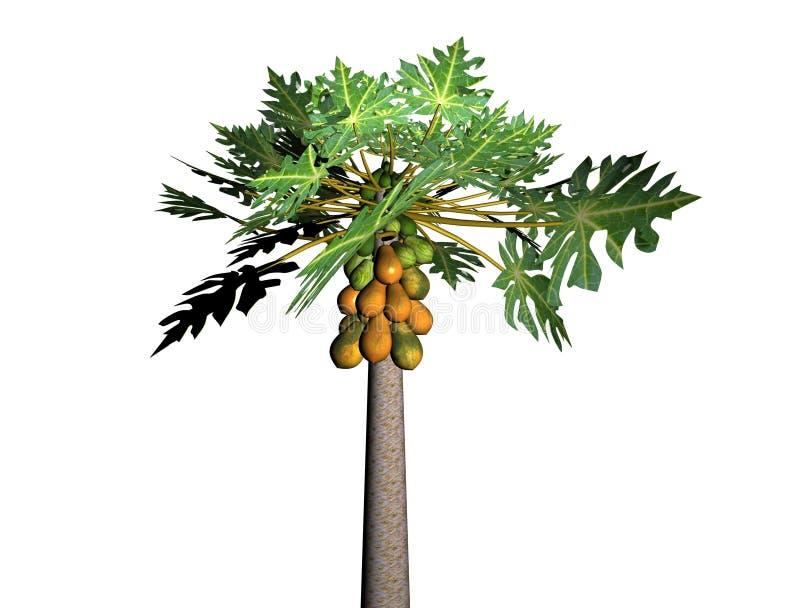 Albero di papaia immagini stock