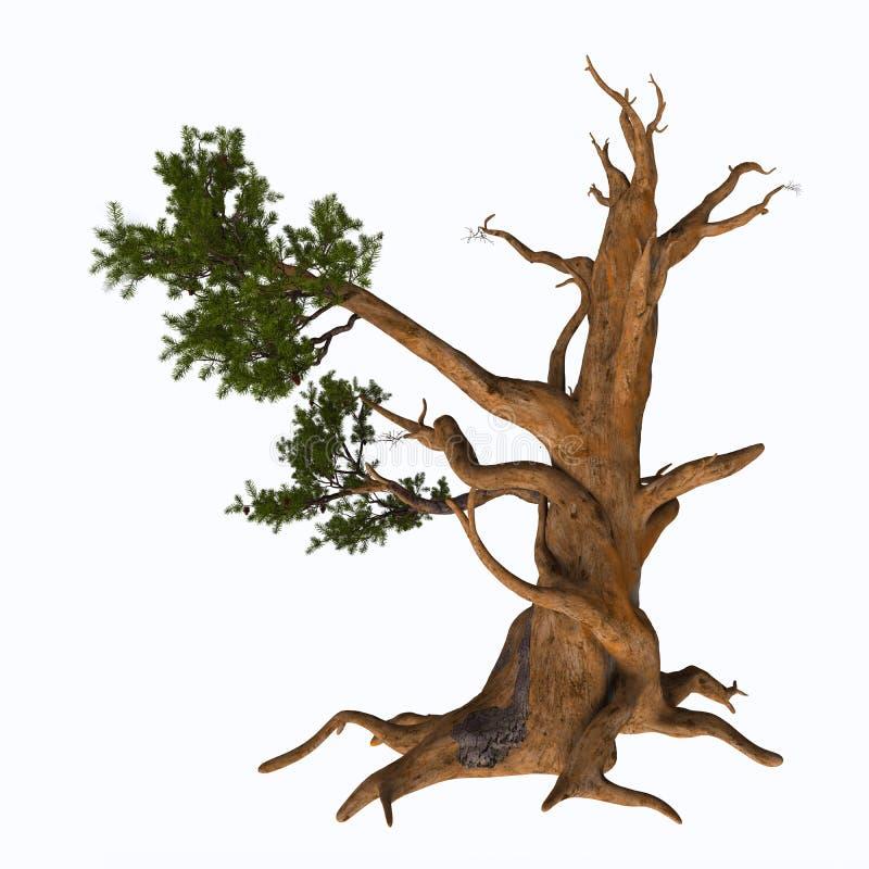 Albero di pino di Bristlecone royalty illustrazione gratis