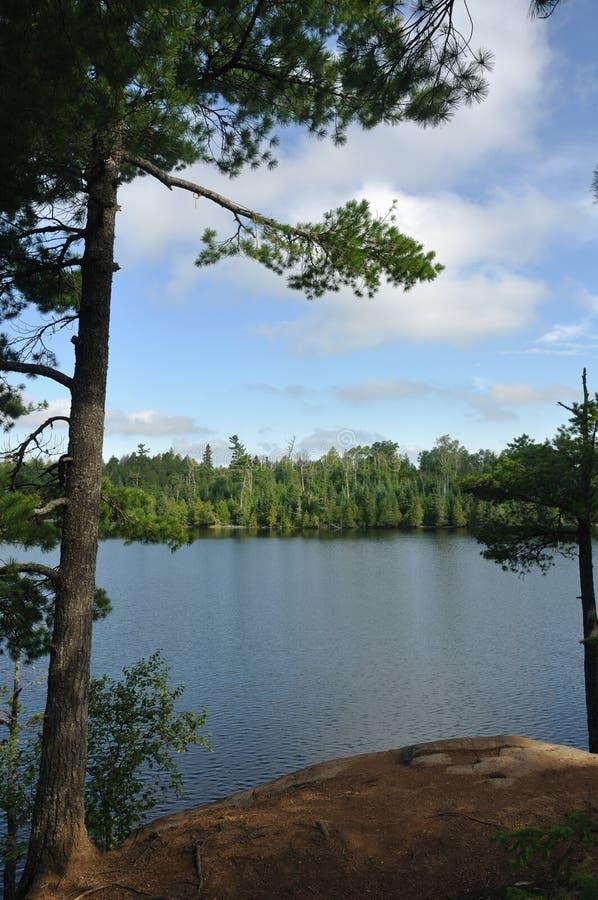 Albero di pino e lago a distanza wilderness fotografie stock