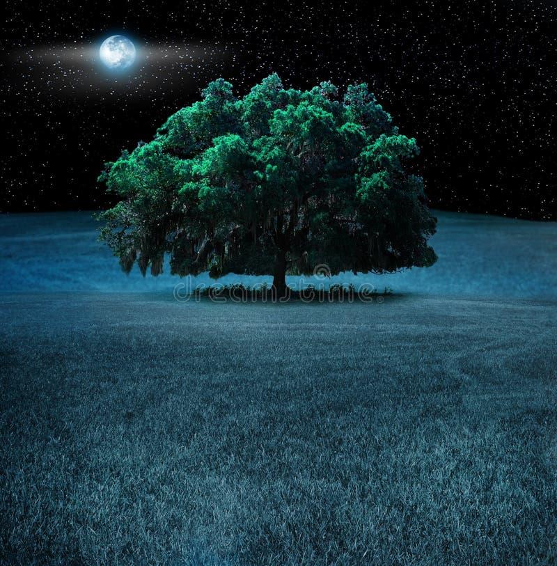 Albero di quercia alla notte immagine stock libera da diritti
