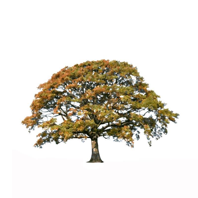 Albero di quercia astratto nella caduta royalty illustrazione gratis
