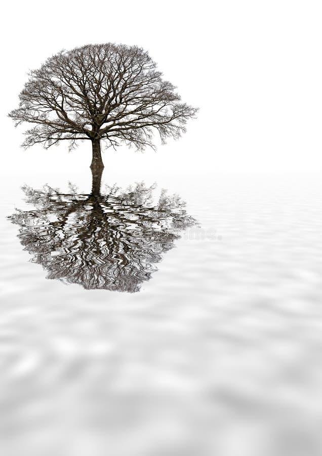 Albero di quercia di inverno fotografia stock
