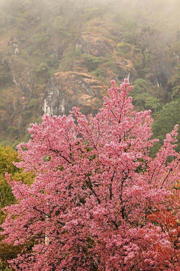 Albero di Sakura immagine stock libera da diritti
