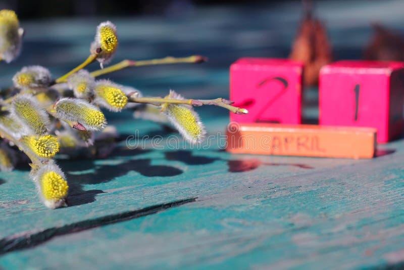 Albero di salice della primavera contro il fondo del cielo blu fotografie stock libere da diritti