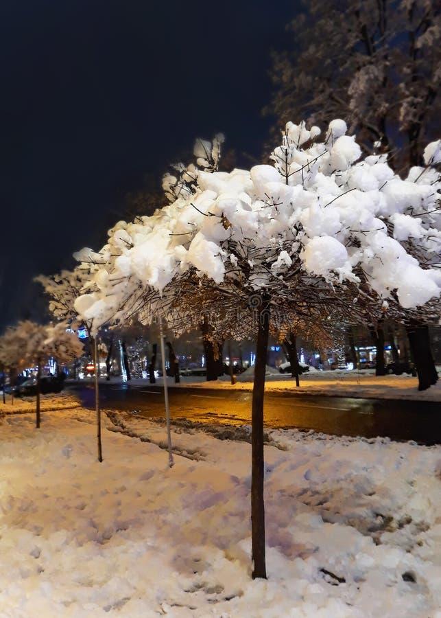 Albero di Snowy con accanto alla strada su una notte fredda di inverno fotografie stock libere da diritti