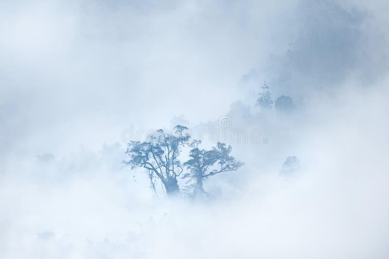 Albero di sogno sopra le nuvole fotografia stock