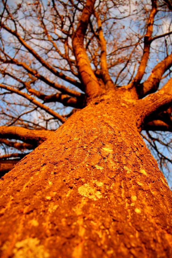 Albero di tramonto fotografia stock