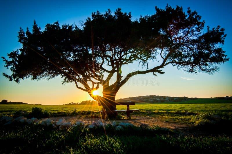 Albero di tramonto immagine stock libera da diritti