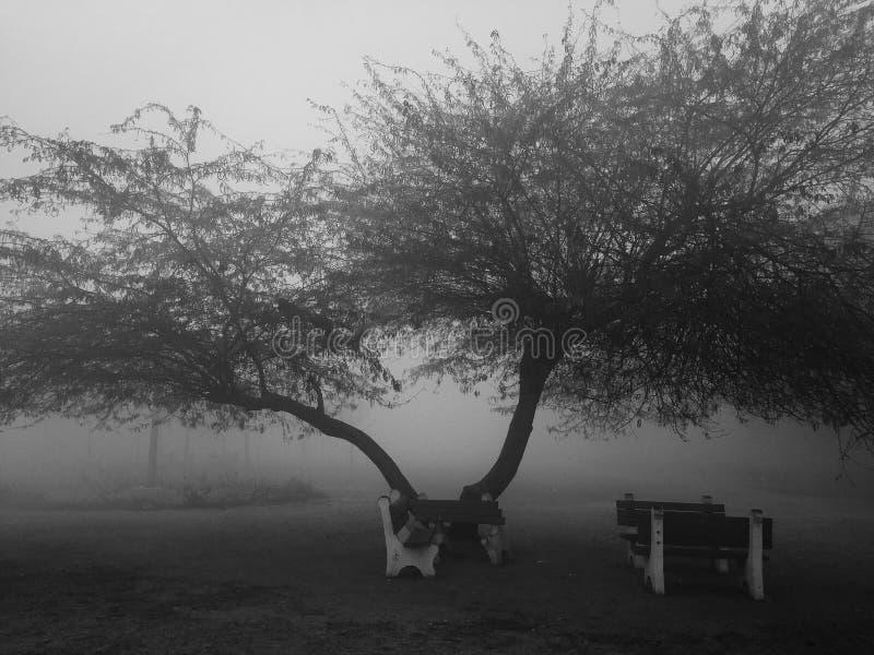 Albero e banco in bianco e nero e nebbia fotografie stock libere da diritti