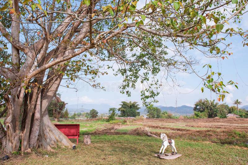 Albero e cavallo di legno in Pai immagini stock