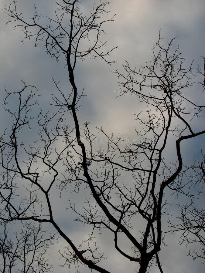 Albero e cielo nudi fotografia stock libera da diritti