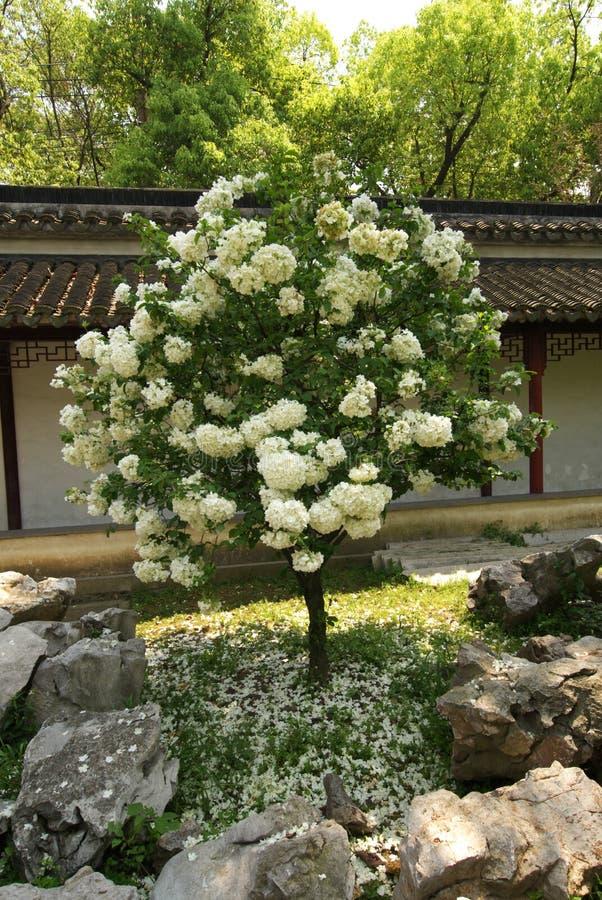 Albero e fiori fotografie stock libere da diritti