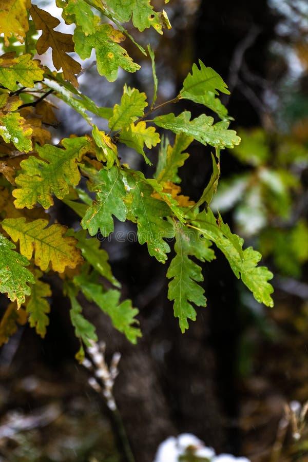 Albero e foglie durante l'autunno di caduta dopo pioggia immagine stock