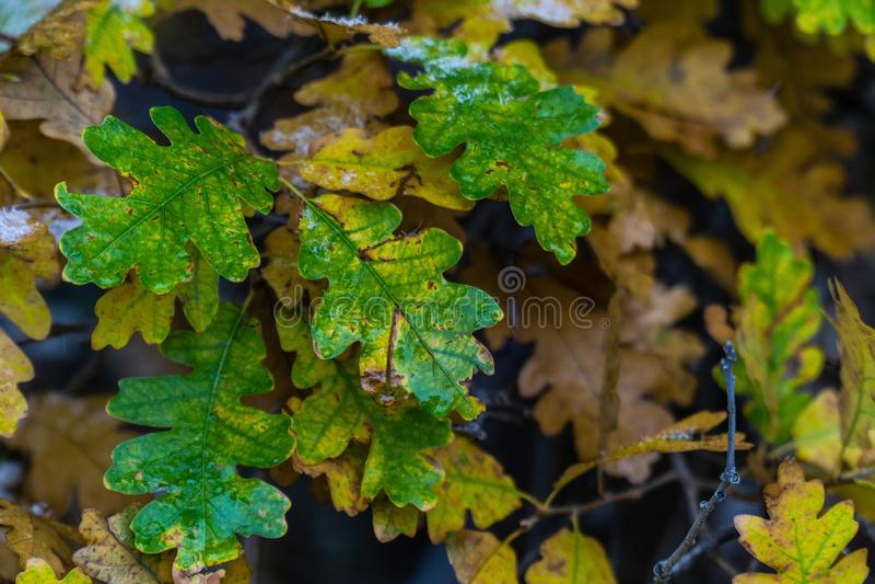 Albero e foglie durante l'autunno di caduta dopo pioggia immagini stock libere da diritti