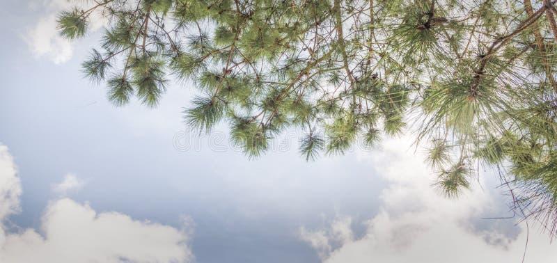 Albero e foglie verdi sul fondo delle nuvole e del cielo blu fotografie stock