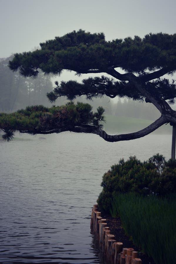 Albero e lago dei bonsai immagine stock libera da diritti