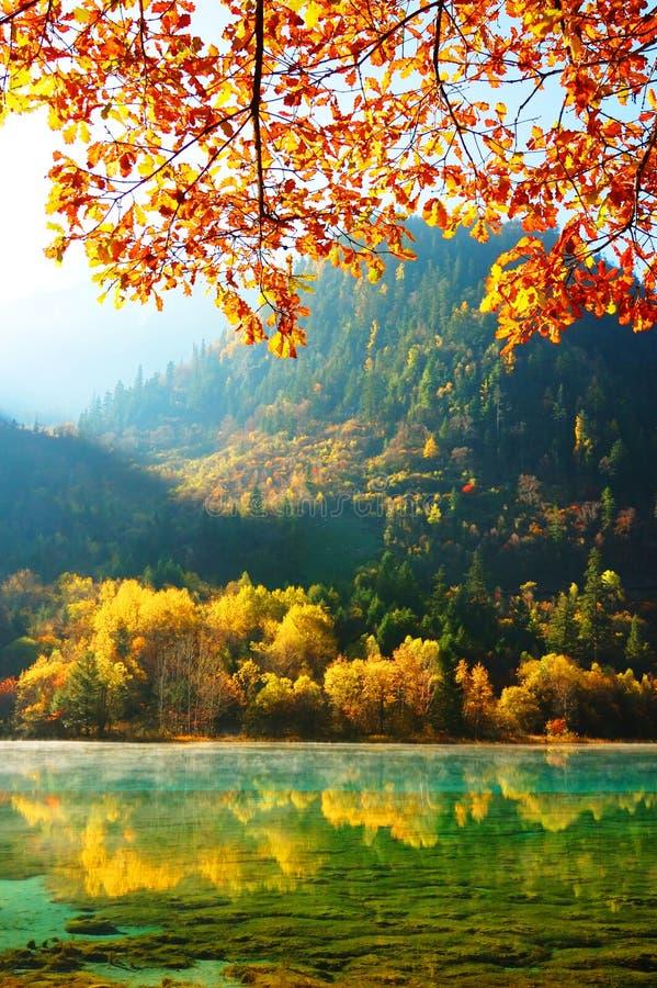 Albero e lago di autunno in Jiuzhaigou fotografia stock libera da diritti