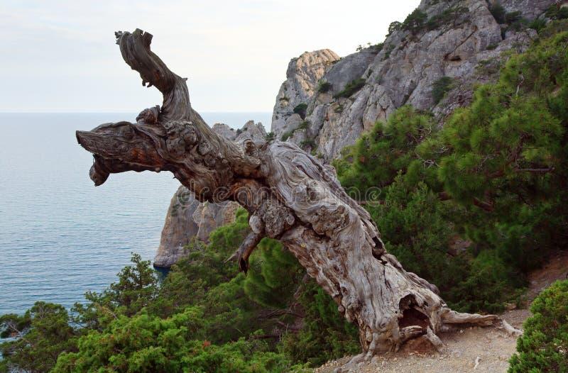 Albero e litorale fotografia stock