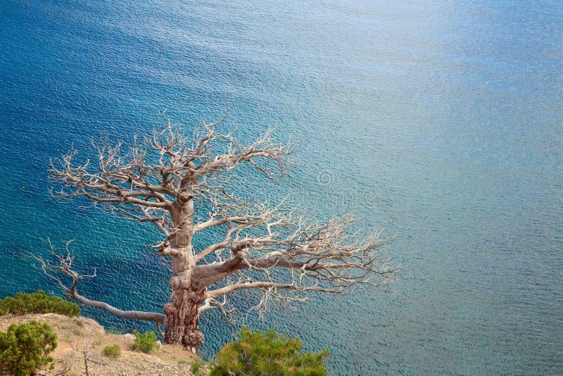 Albero e litorale fotografie stock libere da diritti