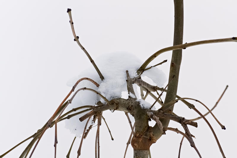 Albero e neve nudi immagini stock libere da diritti