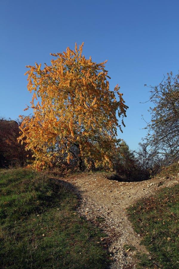 Albero e percorso in autunno fotografia stock libera da diritti