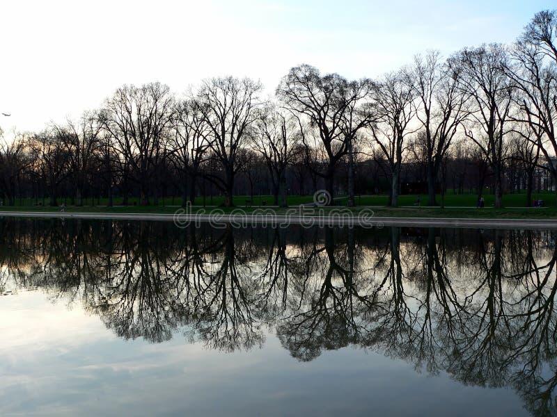 Albero e raggruppamento di riflessione al memoriale di Lincoln in Washington DC fotografia stock libera da diritti