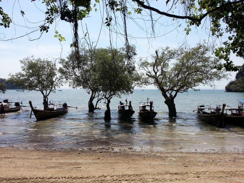 Albero e spiaggia merlettata barca in Bali fotografia stock libera da diritti