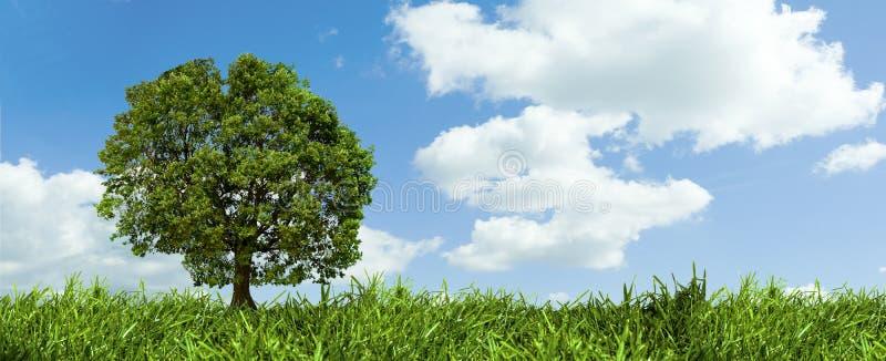 Albero ed il cielo immagini stock libere da diritti