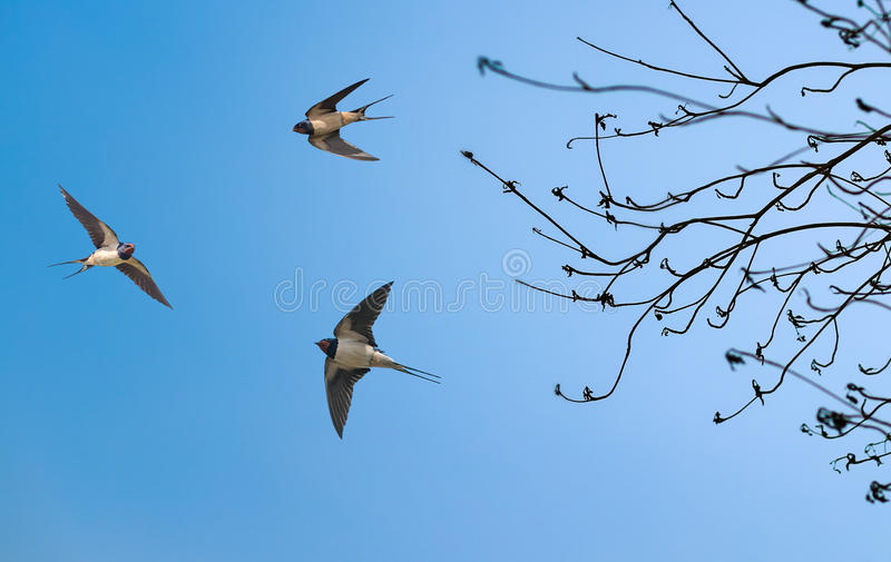 Albero ed uccelli il giorno soleggiato in primavera immagini stock libere da diritti