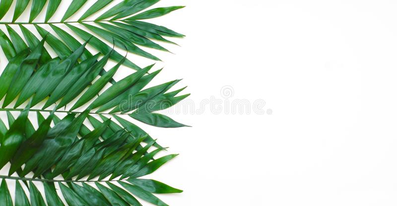 Albero esotico tropicale Isoalted delle foglie verdi della palma su fondo bianco Holliday Patern Template immagini stock